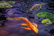 Lily Pads Posters - Animal - Fish - Theres something about koi  Poster by Mike Savad