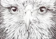Richardson Drawings Posters - Animal Kingdom Series - Bird Of Prey Poster by Bobbie S Richardson