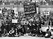 Animal Activists Prints - Animal Rights demonstration London Print by David Fowler