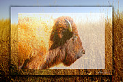 Bison Digital Art - animals - bison - Spirit of The Tall Grass  by Ann Powell
