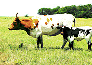 Mammals Photos - animals - cows- Cow and Calf  by Ann Powell