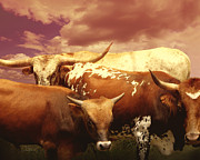 Texas Longhorns Photos - animals - cows- Longhorns La Familia  by Ann Powell