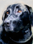 Retrievers Digital Art Metal Prints - animals - dogs - Black Lab Metal Print by Ann Powell