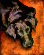 Sleeping Dogs Digital Art Prints - animals- dogs Sleeping Dog Print by Ann Powell