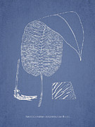 Anisogonium Cordifolium Print by Aged Pixel