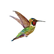 Flying Bird Paintings - Anna Hummingbird by Amy Kirkpatrick