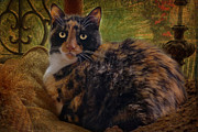 Cats Metal Prints - Annabelle Metal Print by Larry Marshall