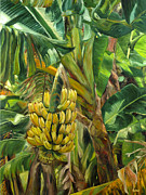 Stacy Vosberg Prints - Annies Bananas Print by Stacy Vosberg