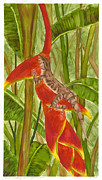 Illustration Painting Originals - Anolis humilis by Cindy Hitchcock