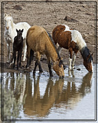 Forelock Photos - Another At The Watering Hole D1004 by Wes and Dotty Weber