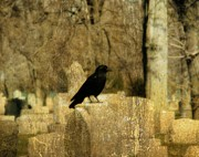 Crow Image Framed Prints - Another Day Framed Print by Gothicolors And Crows