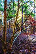 Barry Jones - Another Tree Grows
