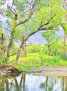 Owens River Metal Prints - Another View Metal Print by Marilyn Diaz