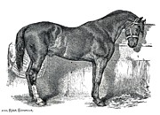 Rose Santuci-Sofranko - Antique Horse Drawing