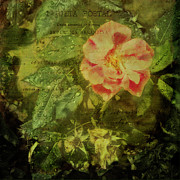 Nature Scene Mixed Media Prints - Antique pink rose with raindrops on green leaves Print by Marianne Campolongo