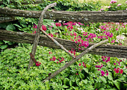 Garden Plow Photos - Antique Plow Handles by Alan L Graham