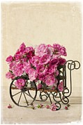 Old Wagon Photos - Antique Rose Cart by Edward Fielding