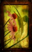 Flicker Framed Prints - Antiqued Cone Flowers Framed Print by Lois Bryan