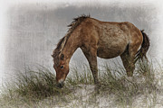 Wild Horse Photos - Antiqued Wild Horse  by Bob Decker