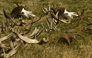 J L Woody Wooden - Antlers Skulls And Horns...