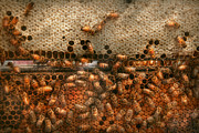 Bees Posters - Apiary - Bees - Sweet success Poster by Mike Savad