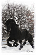 Friesian Posters - Apollo Power Poster by Royal Grove Fine Art