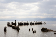 Bono Originals - Apostles of the Salton Sea by Hugh Smith