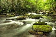 Phyllis Peterson - Appalachian Spring Stream