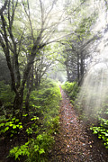 Smokey Sky Photos - Appalachian Trail by Debra and Dave Vanderlaan