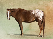 Profile Posters - Appaloosa Poster by Betty LaRue