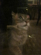 Photos Of Cats Photo Posters - Apparition of Lucy Poster by Guy Ricketts