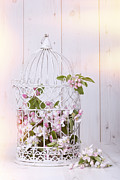 Bird Cage Posters - Apple Blossom Poster by Christopher and Amanda Elwell