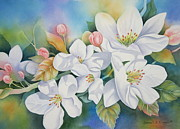 Tree Blossoms Originals - Apple Blossom Time by Deborah Ronglien
