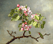 Apple Blossoms And A Hummingbird Print by Martin Johnson Heade
