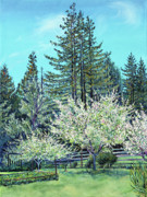 California Landscape Art Posters - Apple Blossoms and Redwoods Poster by Asha Carolyn Young