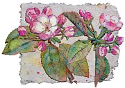 Apple Blossoms Mixed Media Prints - Apple Blossoms Print by Cheryl Stevenson