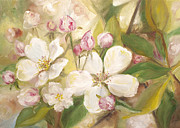 All - Apple Blossoms  by Lisa Strazza