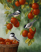 Small Bird Posters - Apple Harvest Chickadees Poster by Crista Forest