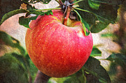 Andee Photography - Apple On The Tree
