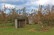 Apple Crates Framed Prints - Apple orchard 1 Framed Print by William Tegtmeyer