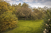 Fall Bushes Prints - Apple Orchard Print by Christopher and Amanda Elwell