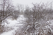 Snow On Branches Prints - Apple Orchard in Winter #2 Print by John Stuart Webbstock