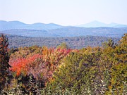 Concord Prints - Apple Orchard Overlook Print by Lisa J Gifford