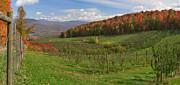 Charles Kozierok - Apple Orchard Panorama
