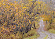 Country Dirt Roads Prints - Apple Orchard Road Print by Alan L Graham