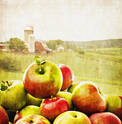 Basket Prints - Apple Picking Time Print by Edward Fielding