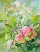 Farm Stand Painting Prints - Apple Pie Print by Kris Parins