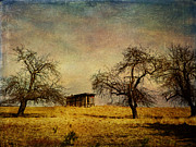 Sheds Digital Art Prints - Apple Trees and Barn Print by Pamela Phelps