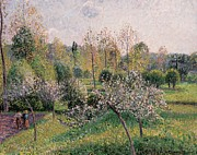 Apple Trees Framed Prints - Apple Trees in Blossom Framed Print by Camille Pissarro