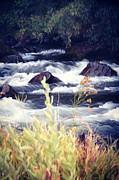 Fishing Creek Prints - Applegate River Print by Melanie Lankford Photography